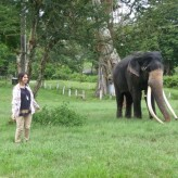 Visit to the elephant camp in Wildlife sanctuary